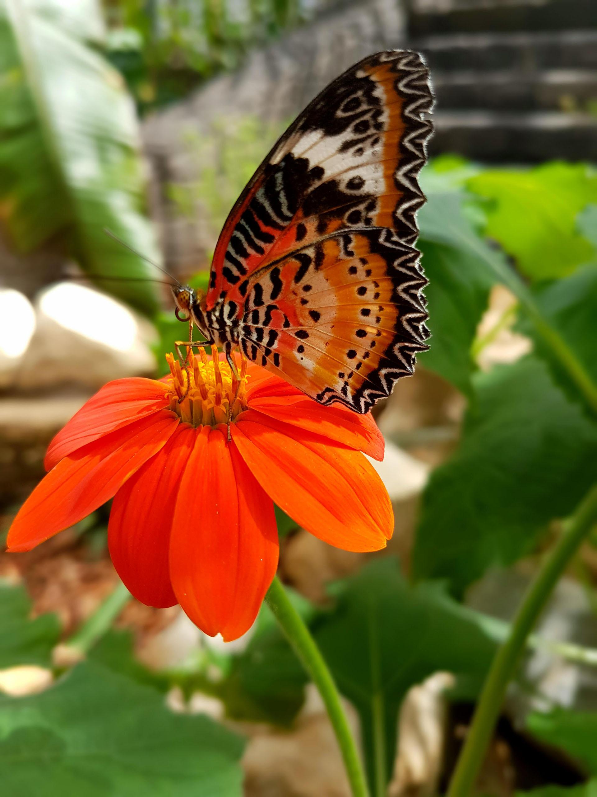 Enjoy a spooky half term at Stratford Butterfly Farm!