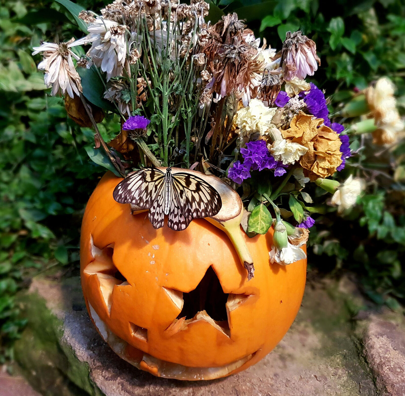 Enjoy a spooky half term at Stratford Butterfly Farm!