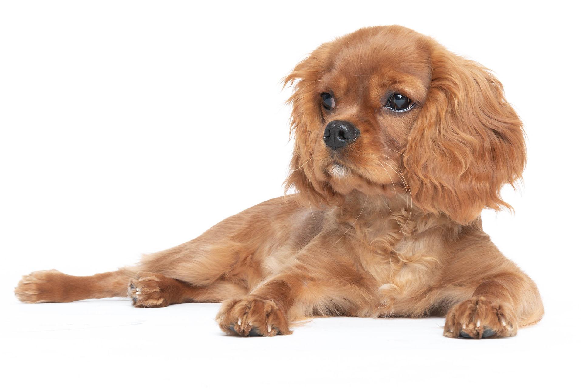 Doggie Photo Shoot at the Charlecote Pheasant Hotel